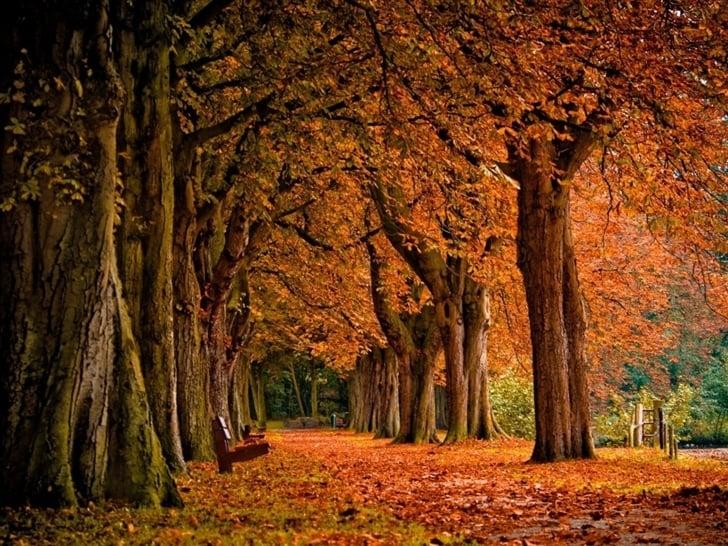 fall wallpaper park