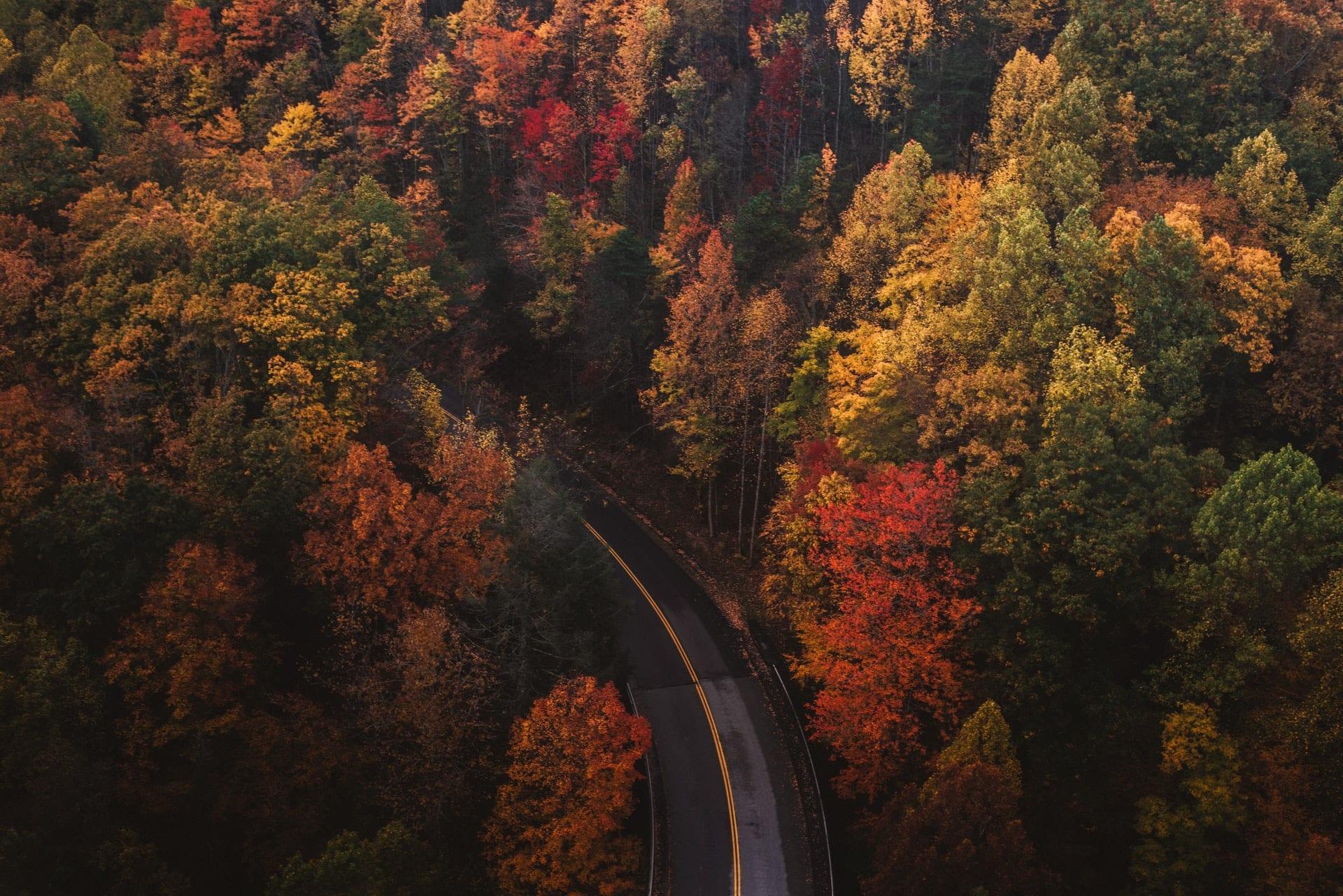 fall road wallpaper