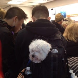 Doggie Backpack: spotted in the Soho store in New York