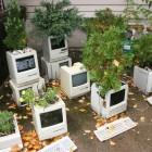 macintosh_planter