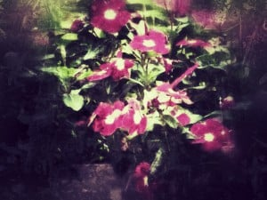 Flowers: After