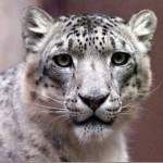 Are you excited about Snow Leopard?